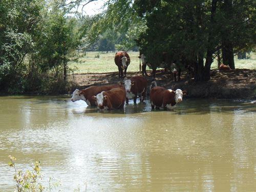 89 Wood County Texas Acres, Ponds : Quitman : Wood County : Texas