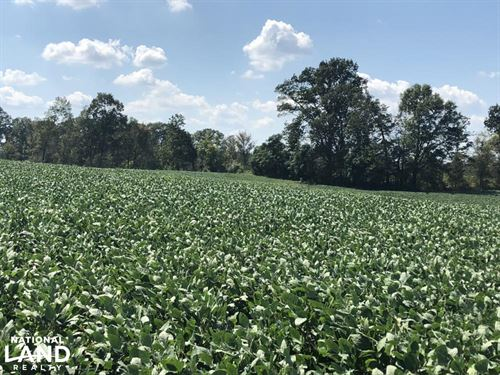 Goose Creek Farmstead : Fairview : Union County : North Carolina