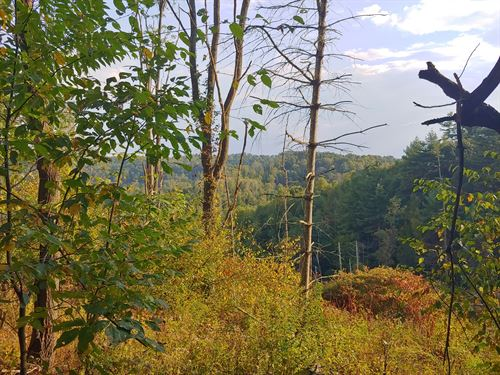 Wooded Land For Sale in Fries, VA : Fries : Grayson County : Virginia