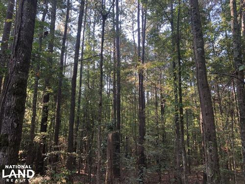 Unbelievable Timber : Magee : Smith County : Mississippi