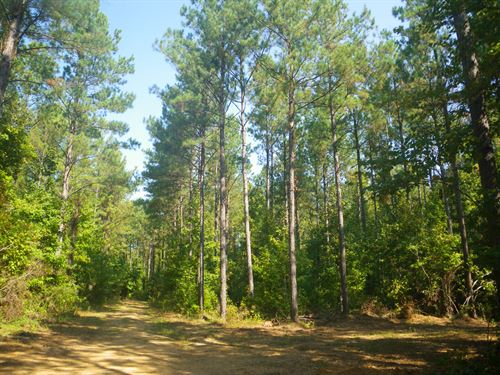 Oak Hill Tract, North Of Hwy 10 : Pine Apple : Wilcox County : Alabama