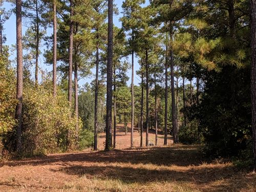 80 Acres Of Great Hunting Land : Marion : Perry County : Alabama