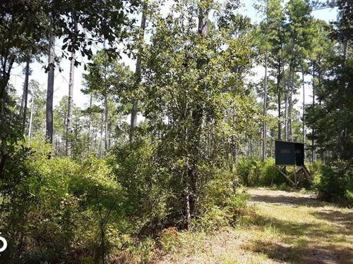 Madison County Hunting And Timber : Madison : Florida