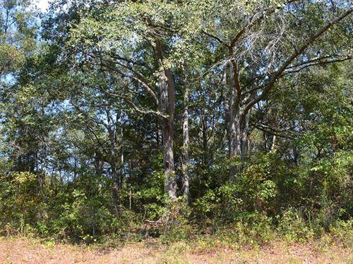 Dye Branch : Thomaston : Upson County : Georgia