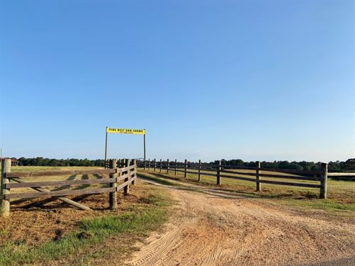 98 Acre Sod Farm For Sale Poplarvil : Lumberton : Pearl River County : Mississippi