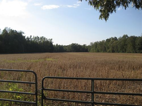Hunting Land Tennessee, Row Crop : Morris Chapel : Hardin County : Tennessee