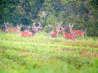 Wildlife Sanctuary Mecca : Dodgeville : Iowa County : Wisconsin