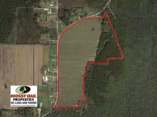 52 Acres of Farm And Hunting Land : Columbia : Tyrrell County : North Carolina