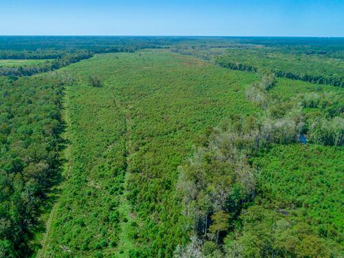 Cypress Swamp Tract : Summerville : Berkeley County : South Carolina