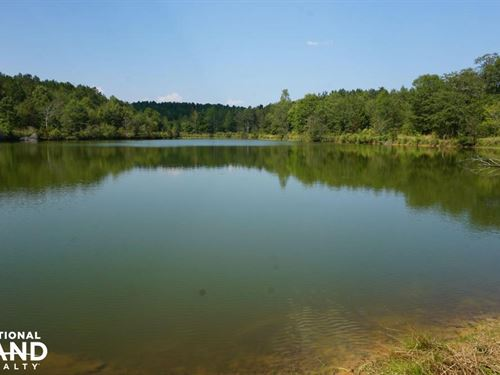 Sipsey River Frontage Timber, Hunti : Aliceville : Pickens County : Alabama