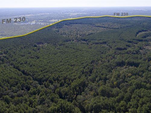 931 Acres Fm 230 Tract 7 : Trinity : Houston County : Texas