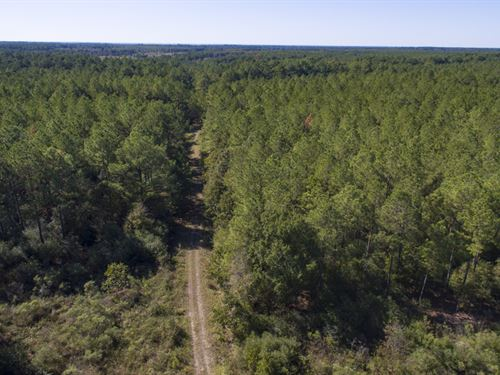 2560 Acres Fm 230 Tract 9 : Trinity : Walker County : Texas