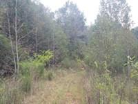 Madison County Land : Danielsville : Madison County : Georgia