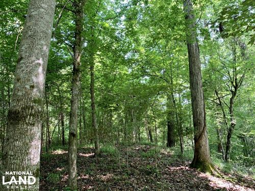 Slater Landing Hunting And Timber : Butler : Choctaw County : Alabama