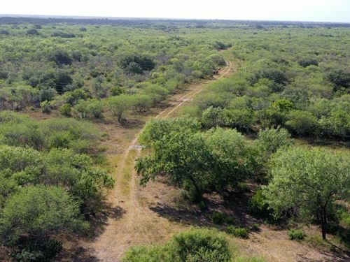 Beautiful South Texas Ranch Land : Beeville : Bee County : Texas