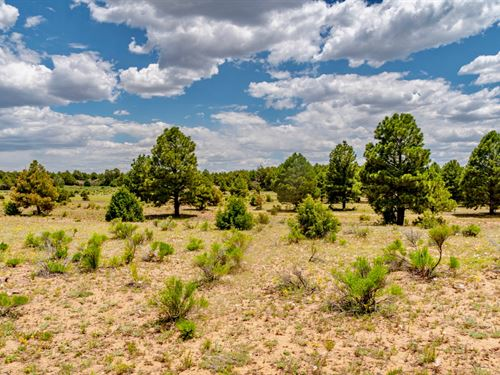 Ranch With Trees & Mountain Views : Ramah : Cibola County : New Mexico