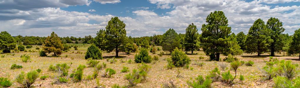 Ranch With Trees & Mountain Views : Ramah : Cibola County : New Mexico