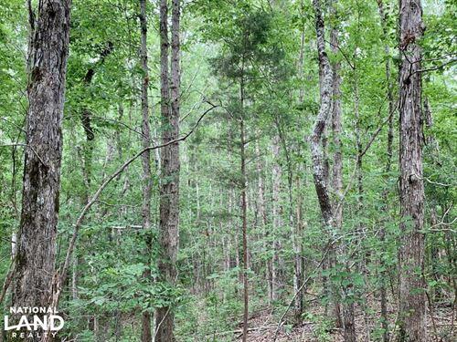 DE Kalb Station Hunting And Timber : De Kalb : Kemper County : Mississippi