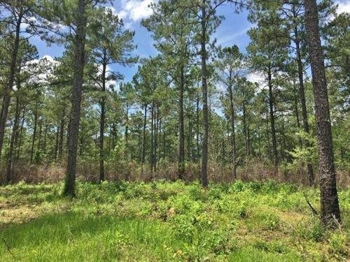 116.46 Acre Hunting Timber Land : Greensburg : Saint Helena Parish : Louisiana