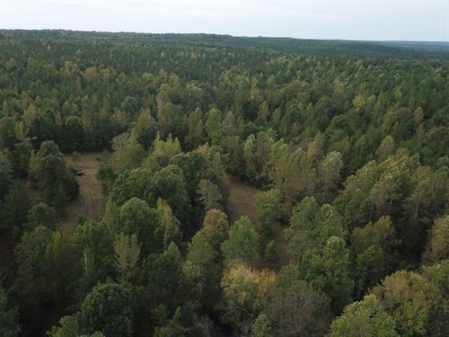 Hunters Paradise With Hunting Camp : Wadley : Randolph County : Alabama
