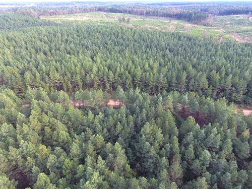 32 Ac, Hunting Land : Kilmichael : Montgomery County : Mississippi