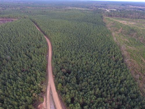 Hunting Land in Great Location : Kilmichael : Montgomery County : Mississippi
