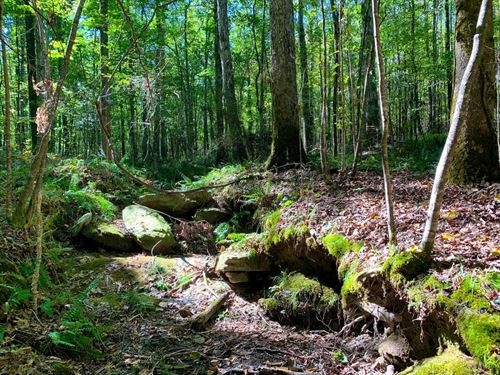Weoka Road Property : Wetumpka : Elmore County : Alabama