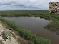 East Lincoln Ranch : Encinal : Webb County : Texas