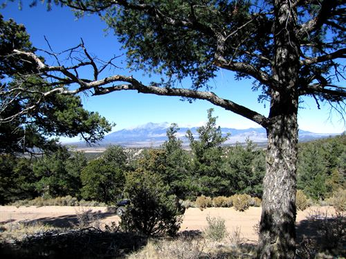 18.5 Private Acres With Trees : Fort Garland : Costilla County : Colorado