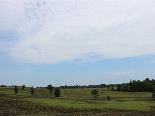 Open Land With 3 Acre Pond : Buena Vista : Marion County : Georgia
