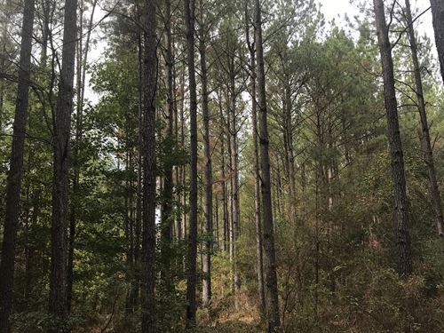 Beautiful Wooded Land : Grady : Montgomery County : Alabama