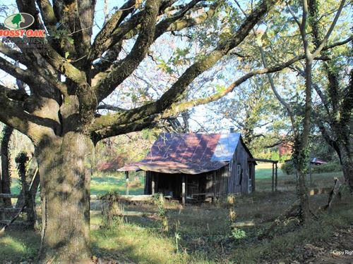 80 Acres Adjacent to Ozark Na : Ozark : Franklin County : Arkansas
