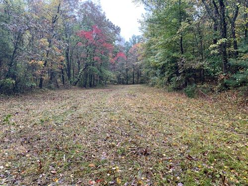 55 +/- Acres in Lamar County, AL : Vernon : Lamar County : Alabama