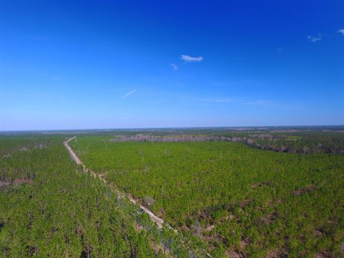 93+ Acre Pine Plantation : Waynesville : Brantley County : Georgia