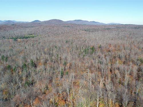 Eden-Craftsbury Forest : Wolcott : Lamoille County : Vermont