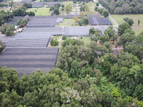 Potential Industrial Hemp Operation : Pierson : Volusia County : Florida