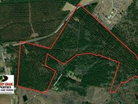 87 Acres of Timber Land For Sale : Council : Bladen County : North Carolina