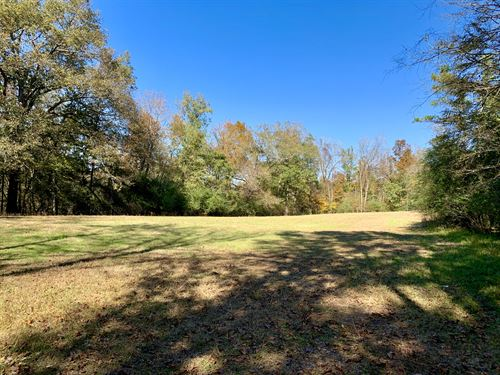 Large Hunting Timber Tract In Berry : Berry : Fayette County : Alabama