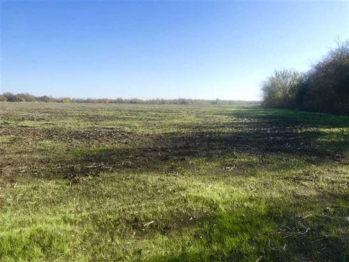 Fannin 19 Acres : Wolfe City : Fannin County : Texas