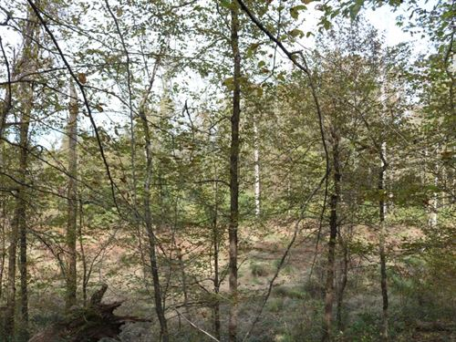 242.5 Acres In Montgomery County : Winona : Montgomery County : Mississippi
