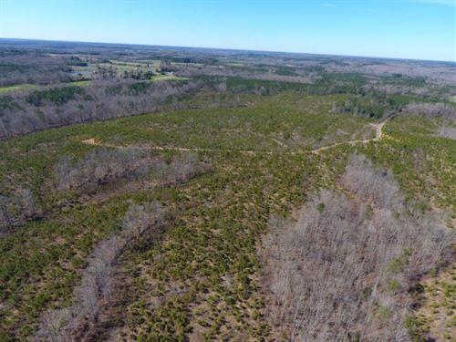 Private Hunting / Timber Tract : Blackstone : Brunswick County : Virginia