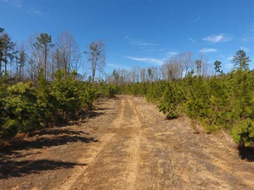 Recreational / Timber Tract : Blackstone : Brunswick County : Virginia