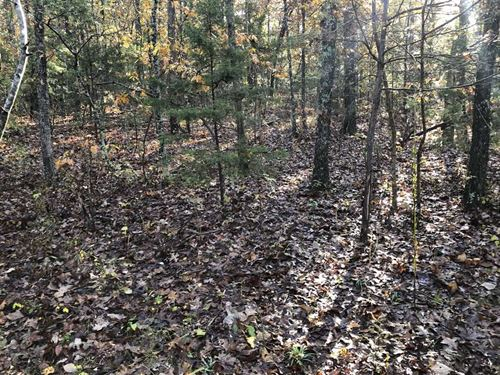 30 Acre Hunting Tract in Laclede : Stoutland : Laclede County : Missouri
