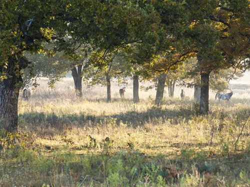 Gorgeous Land Available, Multi Use : Mineral Wells : Palo Pinto County : Texas
