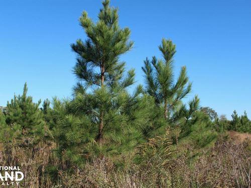 Cates Mead Timber Tract : Waynesboro : Burke County : Georgia