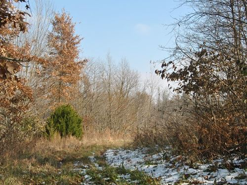 37.5 Prime Country Acres, Flat : Flat Rock : Lawrence County : Illinois