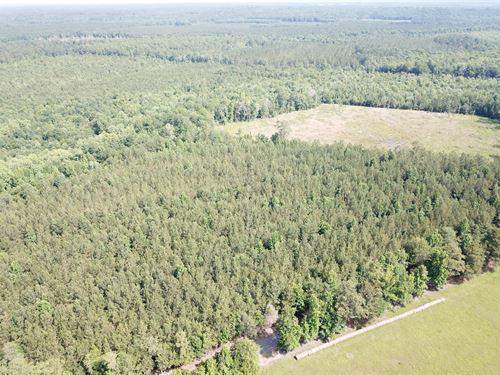 Hyatt Tract : Pinebelt : Dallas County : Alabama
