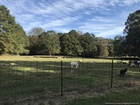Beautiful Farm With Pond And Views : Sontag : Lawrence County : Mississippi