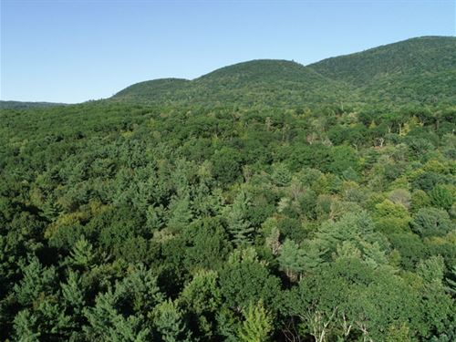 Middle Plains Forest : Middlebury : Addison County : Vermont