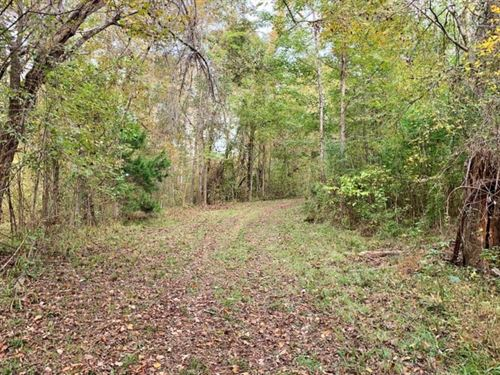 70 Acre Hardwood Hunting Land : Woodville : Wilkinson County : Mississippi